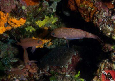 Alonissos, Alonnisos, Alonissos Triton, Dive, Scuba diving
