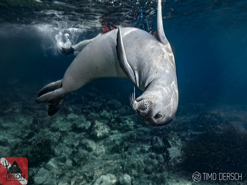 Monk Seal, Billy the seal, Alonissos, Alonnisos, Alonissos Triton, Dive Center